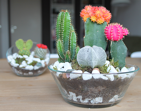 how to make a hanging cactus terrarium
