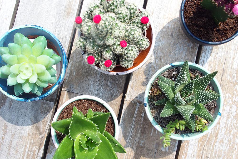 Cactus-Pots-DIY-paint-02